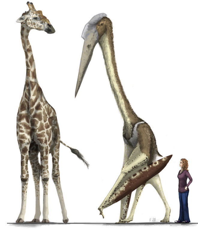 Arambourgiania-vs-giraffe-vs-the-Disacknowledgement-Witton-Low-Res